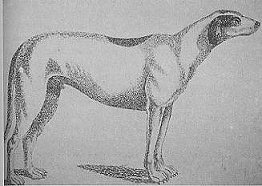 Lord Altamont's Irish wolf-dog