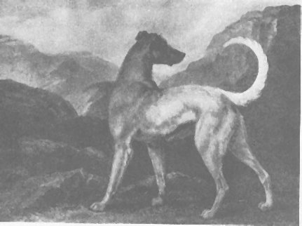 Reinagle's portrait of the Irish wolfdog