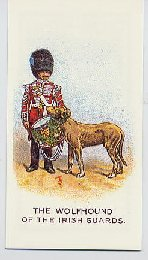 Regimental pets cigarette card