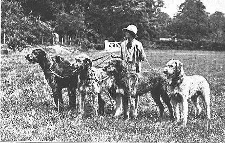 The History of the Breed