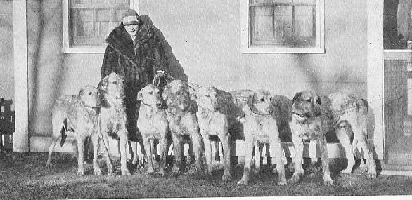 Mrs. Stewart with a group of hounds