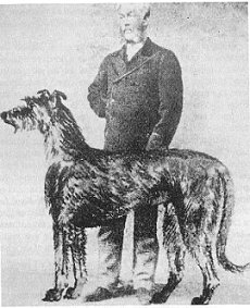 Capt. Graham & his wolfhound model