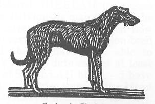 Irish Wolfhound Drawing