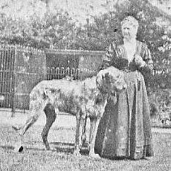 Annual Reports on the breed from the Kennel Gazette 1900-1914