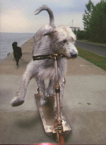 The Irish Wolfhound In Cards